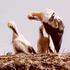 110 Cicogne nei cieli della Calabria, più della metà a Sibari